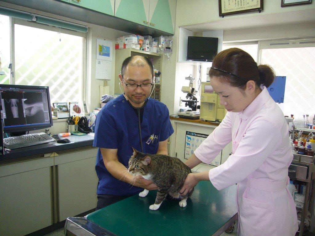 イズマ動物病院【三重県松阪市、動物病院】 当院の中枢となる場所です。 ここで採血から各種検査、注